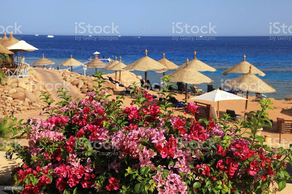 Beach umbrellas on sandy beach, Egypt stock photo