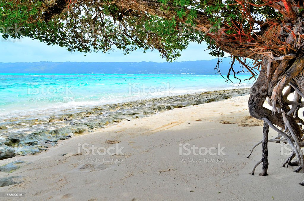 Beach under a tree stock photo