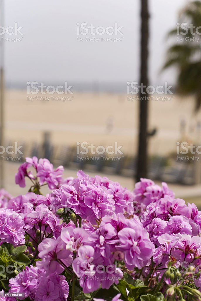Beach View royalty-free stock photo