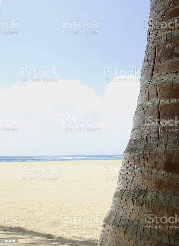 Beach View With Palm Trunk royalty-free stock photo