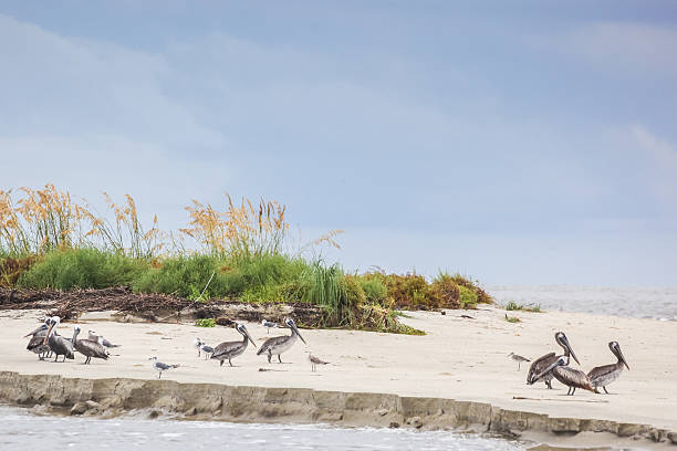 Beach Walk Birds stock photo