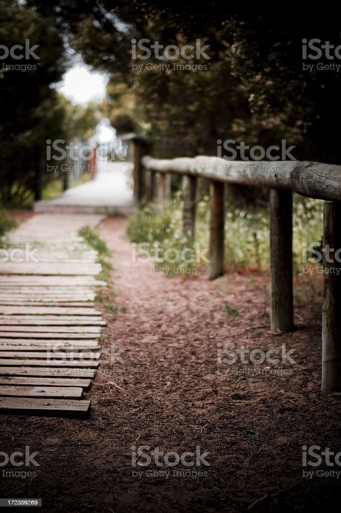 Beach walkway boardwalk sandy with trees royalty-free stock photo