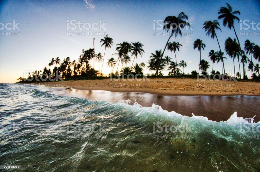Praia, ondas e palmeiras - foto de acervo