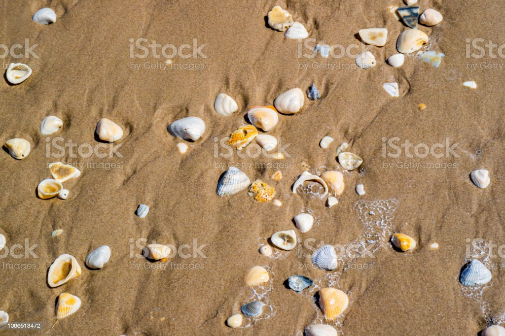 Beach with a lot of seashells on seashore in South Padre Island, Texas stock photo