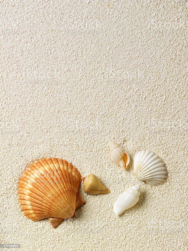 Beach with a lot of seashells stok fotoğrafı