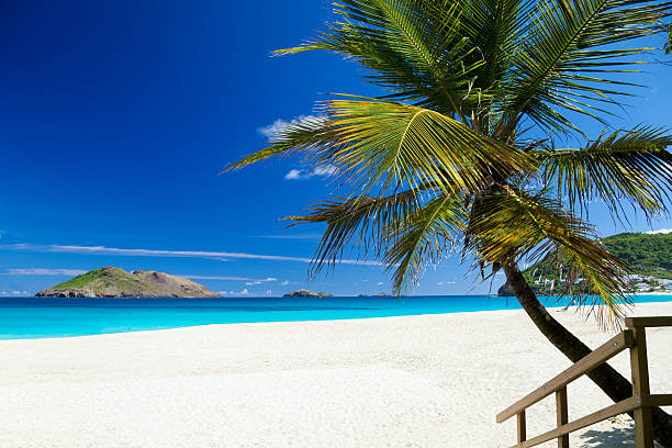 Strand mit Palme in St.Barths, French West Indies – Foto