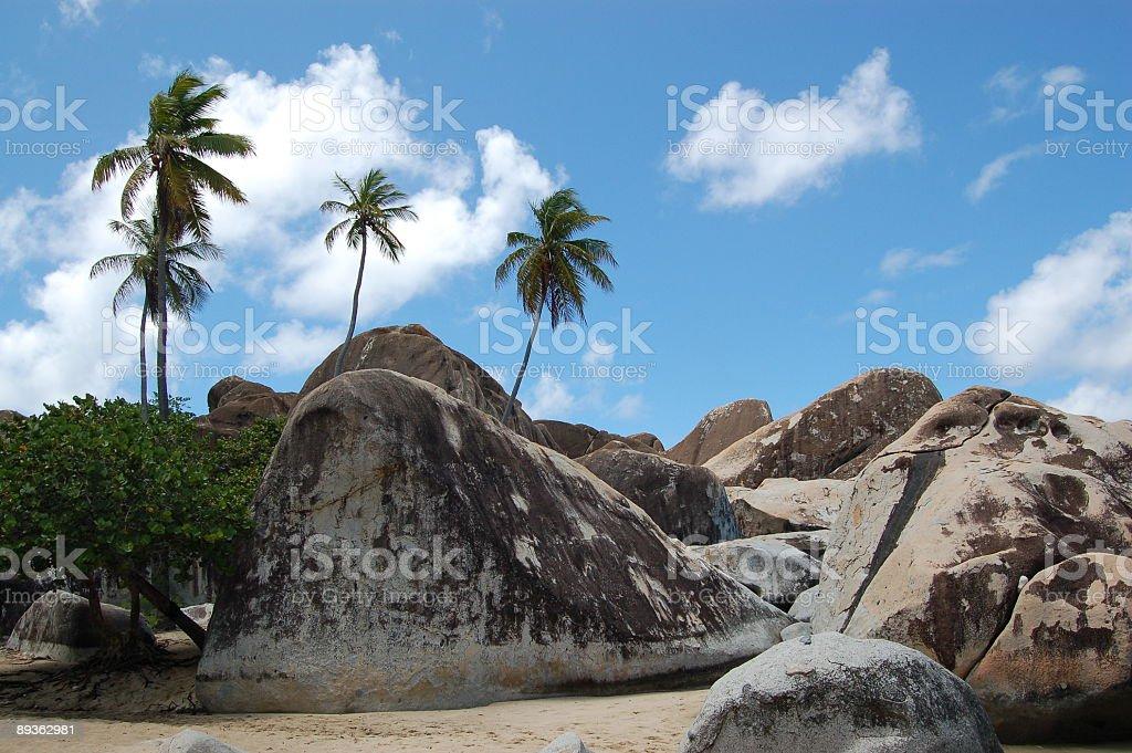 Plage de rochers et de palmiers photo libre de droits