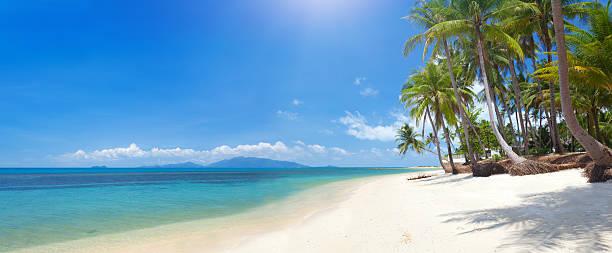 Strand mit Kokospalmen und das Meer – Foto