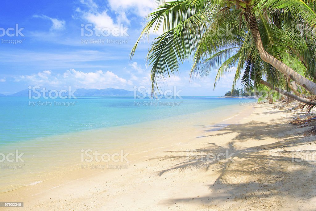 beach with coconut palm and sea royalty-free stock photo