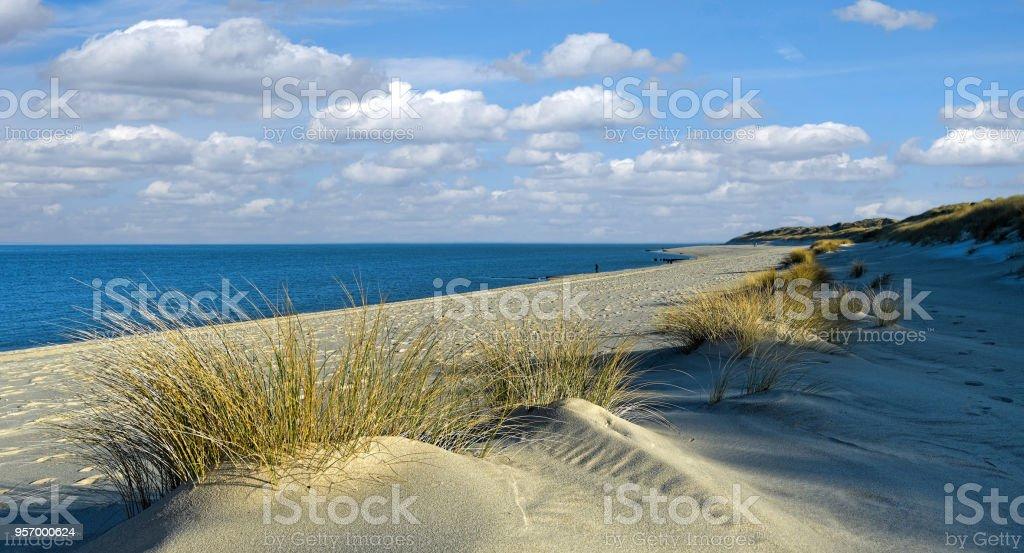 Beach With Curvy Sand Dunes At The Coast Of Island Sylt Germany