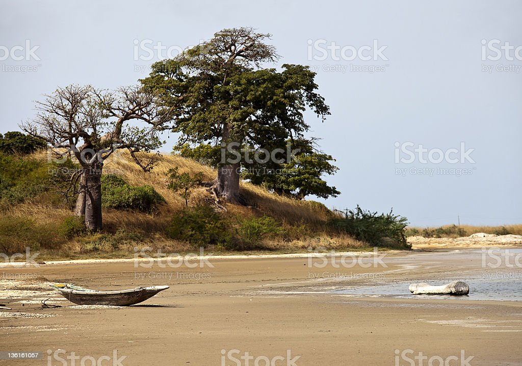 Beach with driftwood and a tree on a hill in the background stock photo