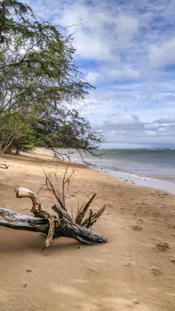 Strand mit Treibholz – Foto