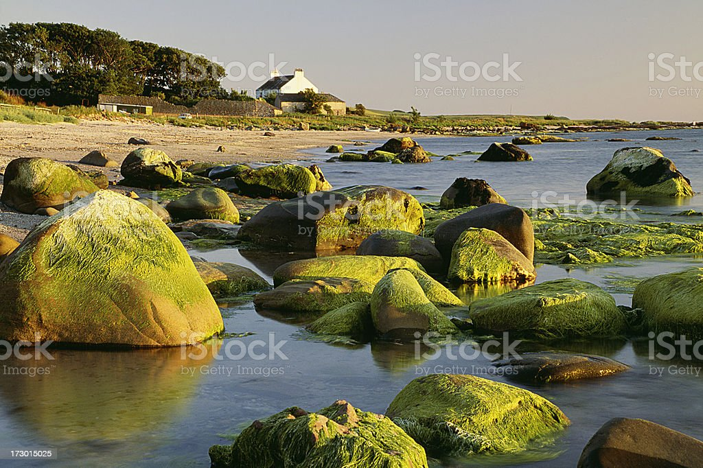 Beach with green mossy stones royalty-free stock photo