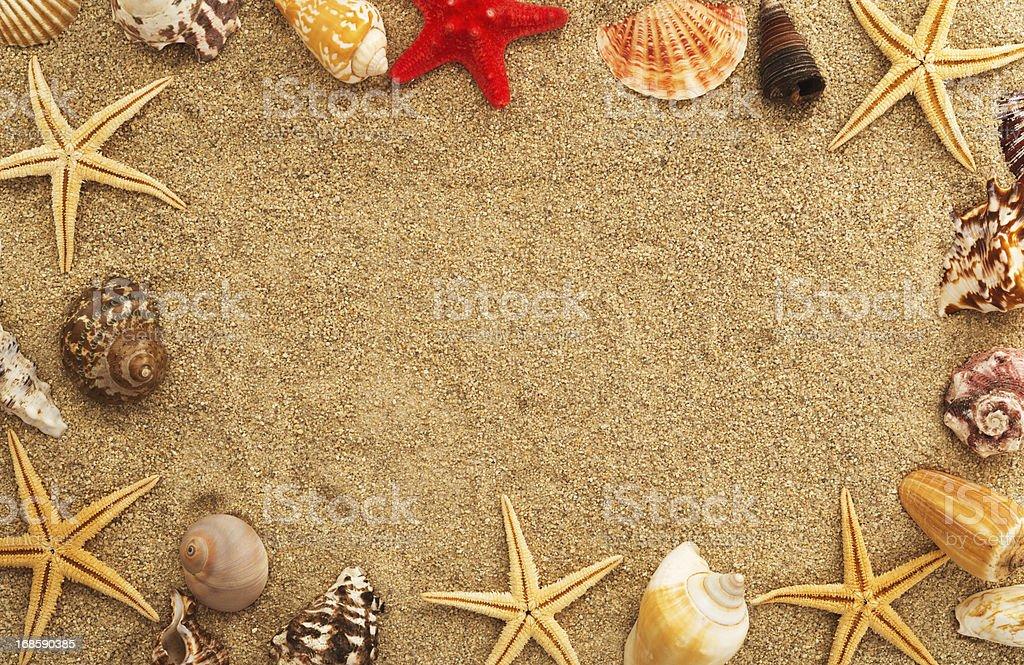 Beach with many seashells and starfish. royalty-free stock photo