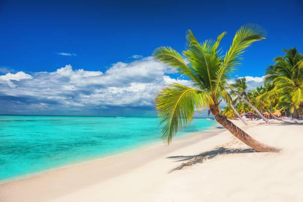 Strand mit Palmen und einem Segelboot im türkisfarbenen Meer auf Saona Paradise Island – Foto