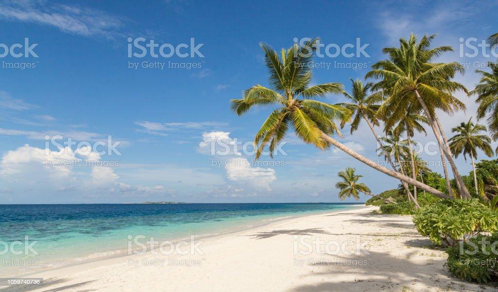 Strand mit Palmen Atoll Insel Malediven – Foto