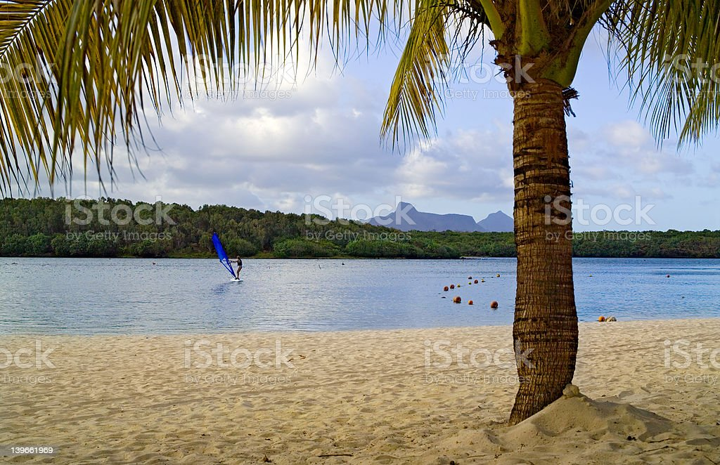 Beach with palm tree and distant windsurfer royalty-free stock photo