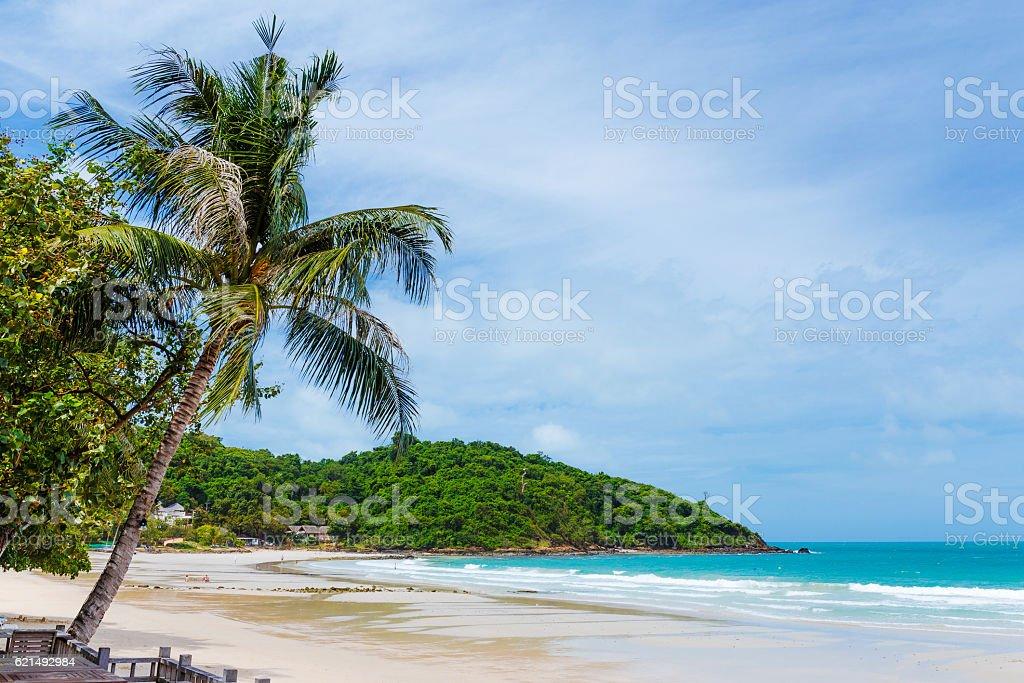 Strand mit Palme Lizenzfreies stock-foto