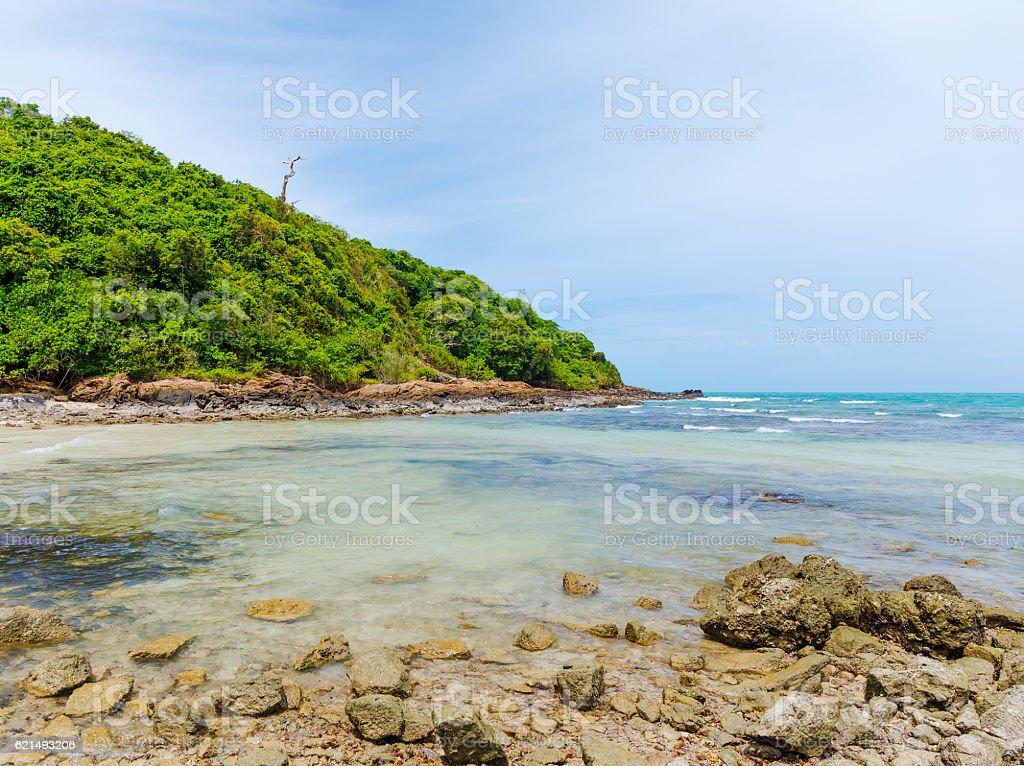 Spiaggia con palma foto stock royalty-free