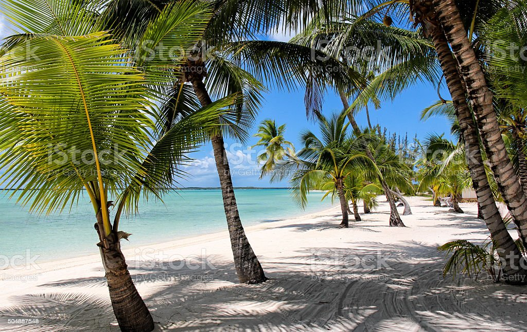Beach with Palm Trees at the Bahamas stock photo