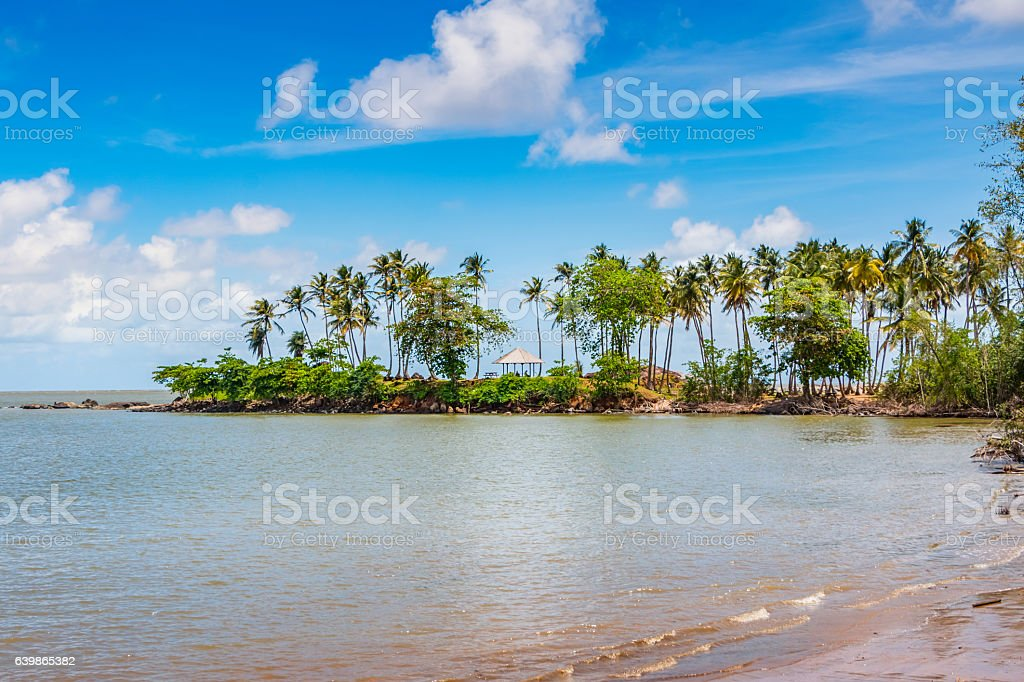 Beach with Palm Trees in Cayenne French Guiana stock photo
