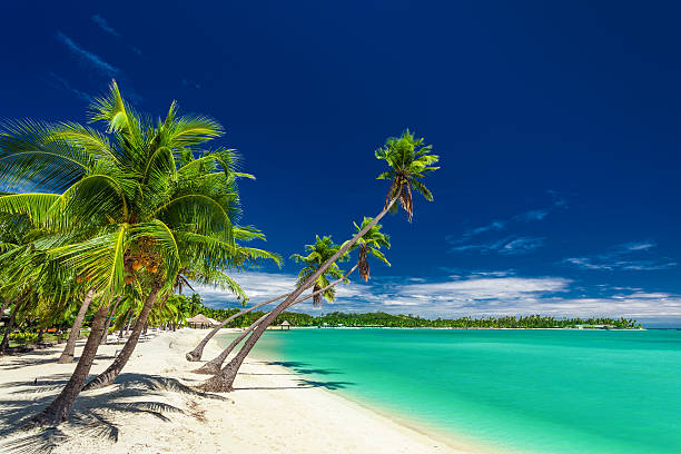 beach with palm trees over the lagoon on fiji islands - fiji stock photos and pictures