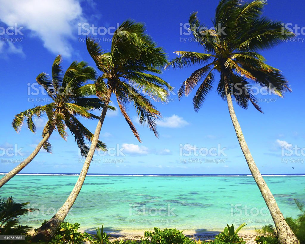 Beach with palm trees over tropical water stock photo