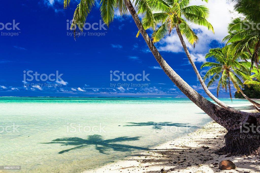 Beach with palm trees,Rarotonga, Cook Islands stock photo