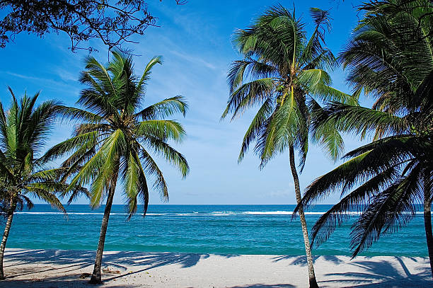beach with palms in kenya - kenya stock photos and pictures