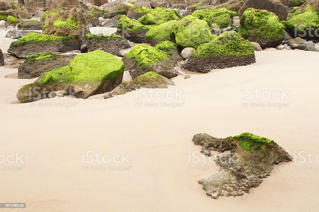 beach with rocks covered green algae, Liencres, Cantabria, Spain royalty-free stock photo