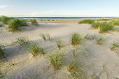 Beach with sand dunes and marram grass in soft evening sunset light. Beach dunes at Skagen Nordstrand where Baltic Sea and North Sea are colliding.