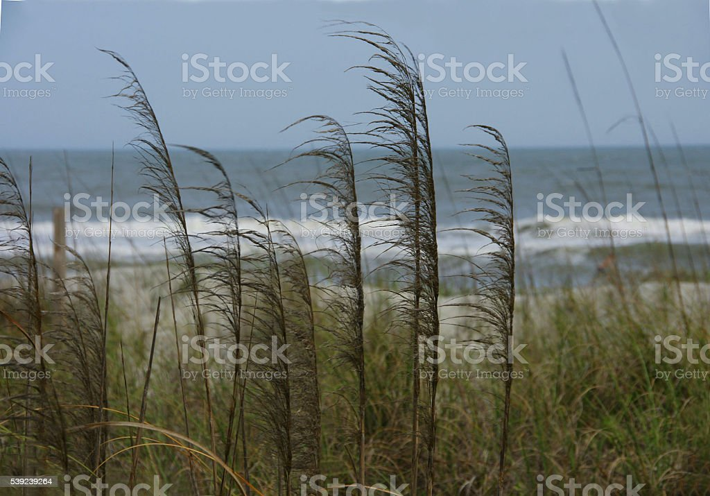 Beach with sea grass royalty-free stock photo