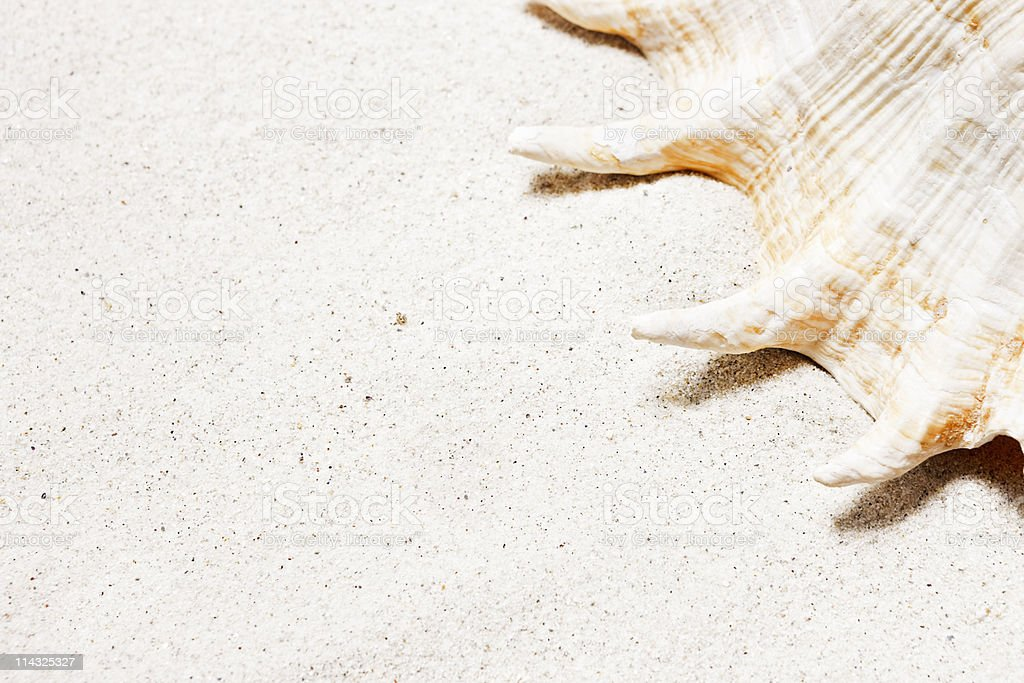 Beach with shell and copy space stock photo
