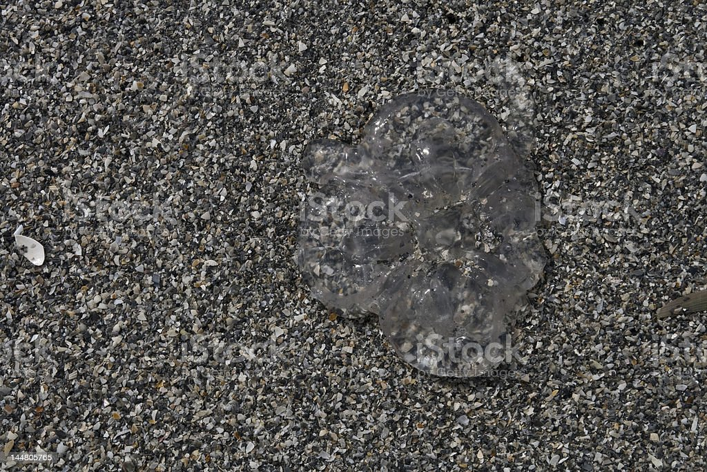 Beached Jellyfish royalty-free stock photo