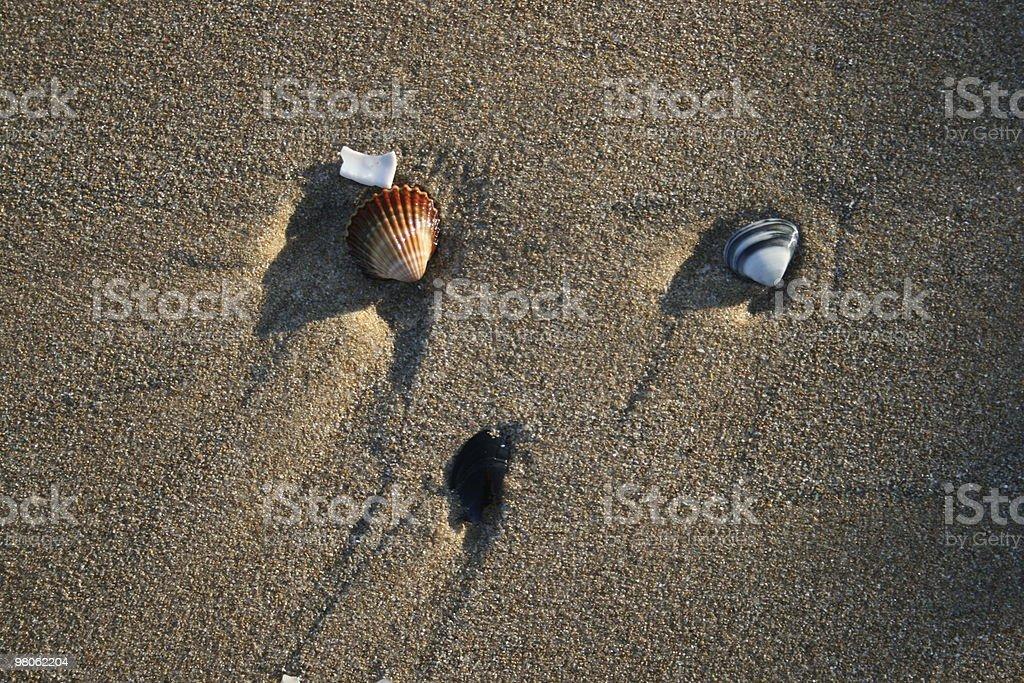 Beached Sea Shells royalty-free stock photo