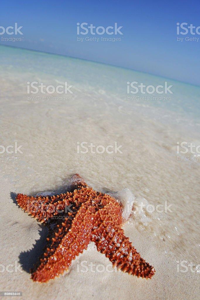 Beached Starfish royalty-free stock photo