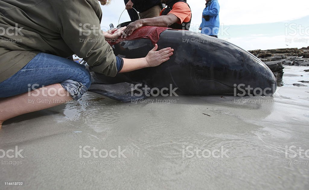 beached whale stock photo