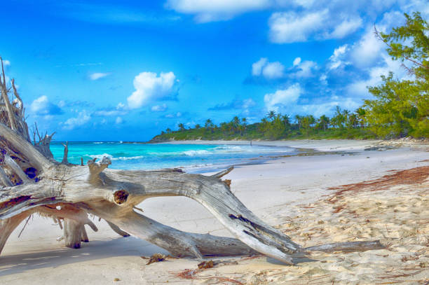 beachscape with driftwood driftwood on lighthouse beach eleuthera, bahamas driftwood stock pictures, royalty-free photos & images