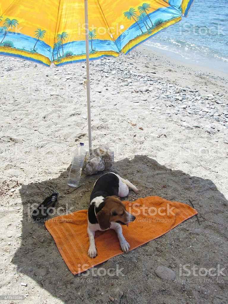 beachy bitch stock photo