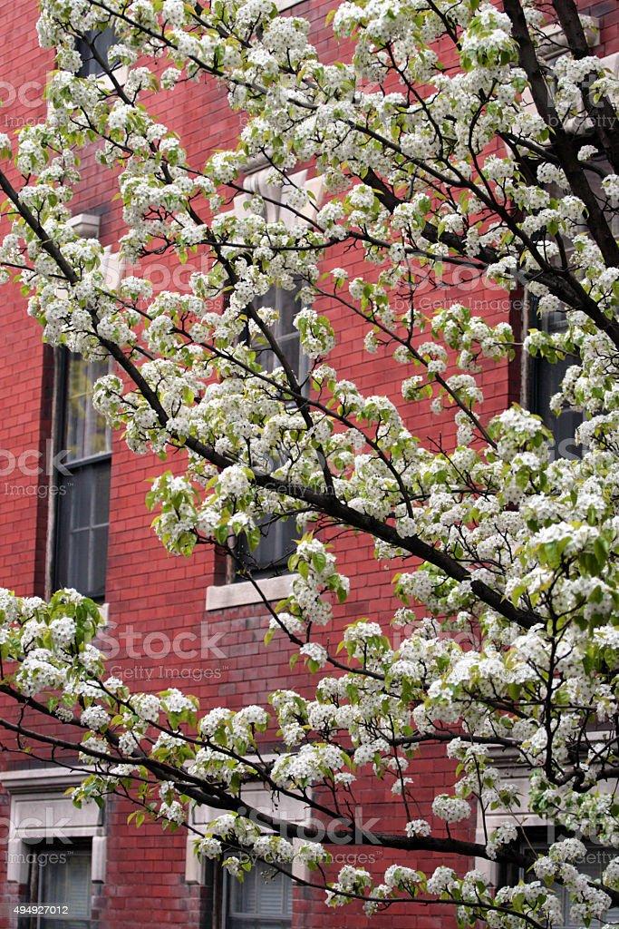 Beacon Hill, Boston stock photo