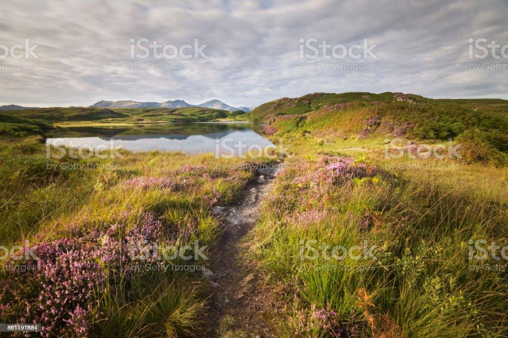 Baken tarn vijver verlicht door warme gouden zonlicht met bloeiende heide- en merengebied bergen op de achtergrond foto
