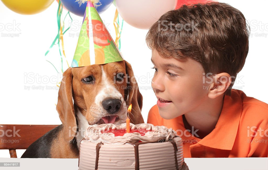 Beagle Birthday Party royalty-free stock photo