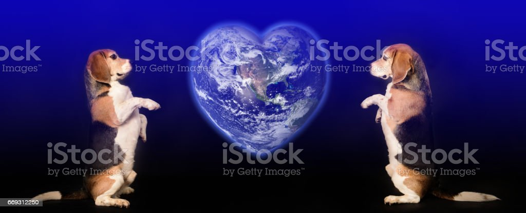 Beagle dogs sitting, global heart stock photo