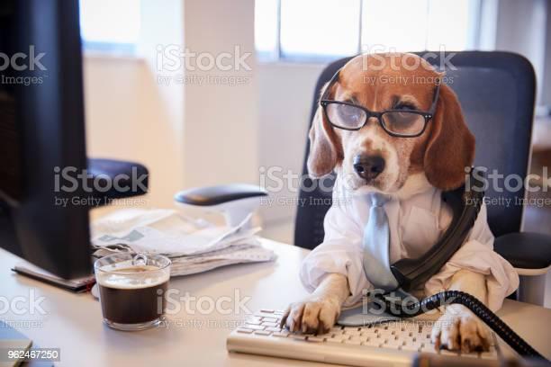 Beagle dressed as businessman at desk taking phone call picture id962467250?b=1&k=6&m=962467250&s=612x612&h=tiubflotwnvqhn3tyyxseon0cdqb8qhahtysjljtda8=