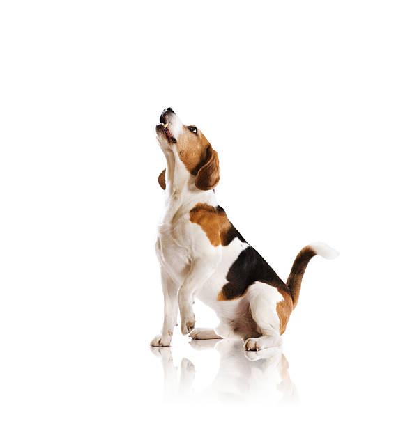 Hund im studio – Foto