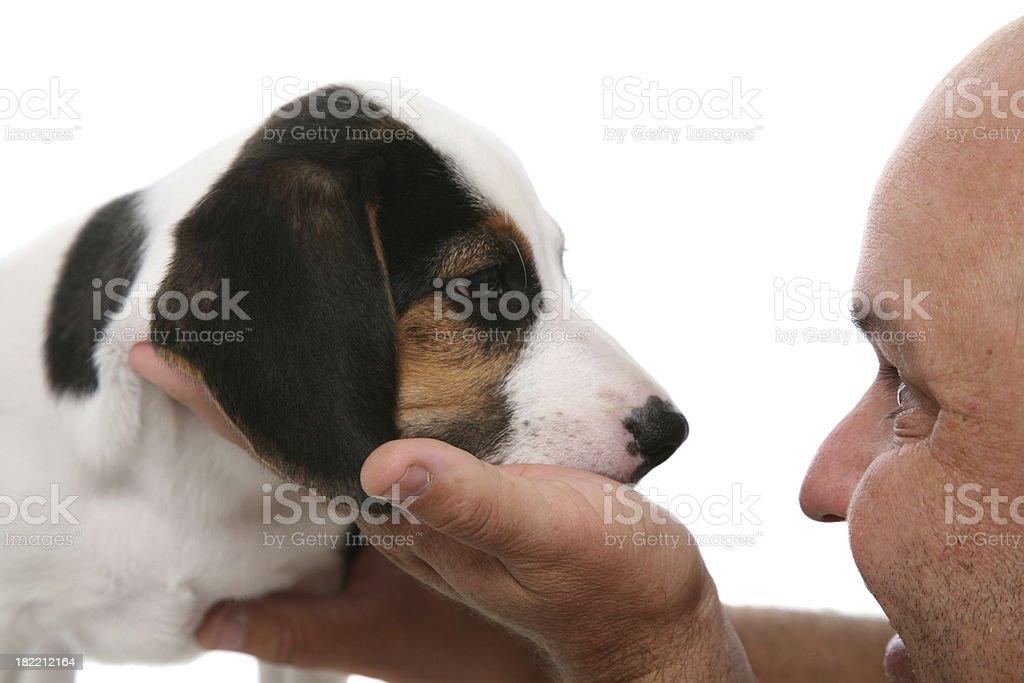 Beagle Pup And Man royalty-free stock photo