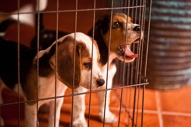 Image result for Dog Boarding istock