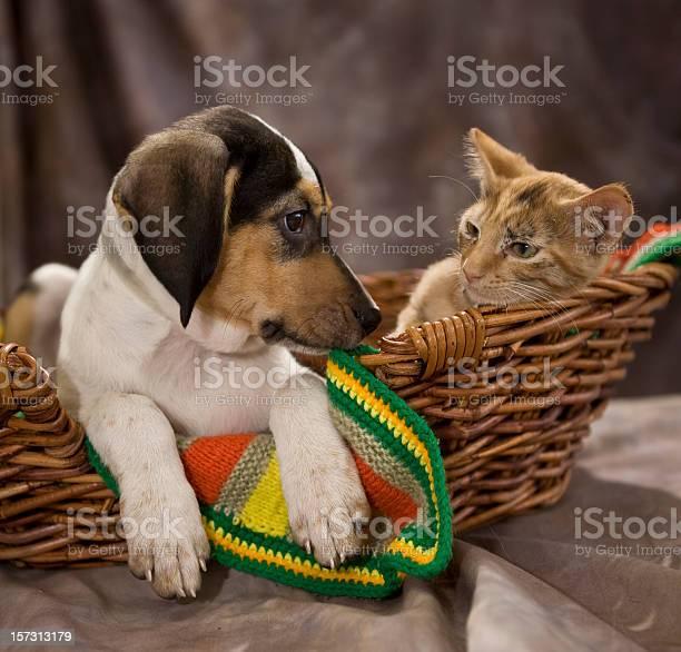 Beagle puppy and kitten picture id157313179?b=1&k=6&m=157313179&s=612x612&h=esgvyifjliexarpxm3j0updeh43ec7vyvngkxiju km=