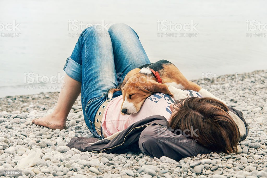 Beagle puppy sleeping on his owner breast stock photo