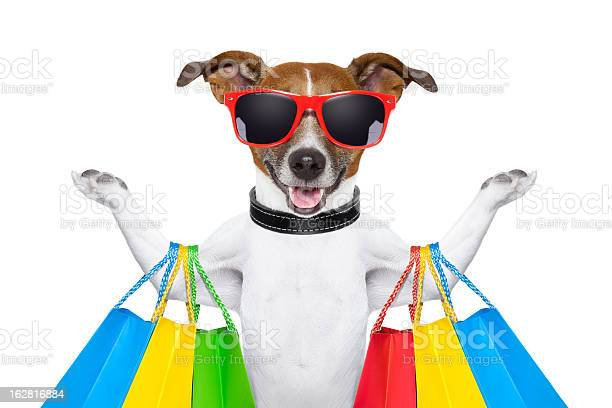 Beagle wearing red sunglasses goes shopping picture id162816884?b=1&k=6&m=162816884&s=612x612&h=vfiomzweb1bw42gz2b5pv3b6w5xn58y1 os03qy7q88=